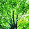 Деревья 24